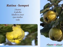 Kutina – omamno dišeč in nadvse zdravilen sadež