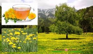 Regrat – zdravilna »divja zelenjava«