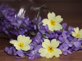 Vijolica – drobcena, očarljiva in še zdravilna